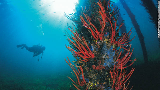 The crystal clear waters in Geographe Bay are ideal for divers, such as this one under the Busselton Jetty.
