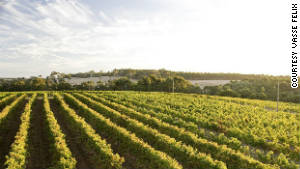 The beautiful vineyards of the Margaret River