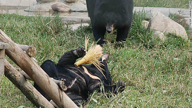 Toys are a key part of the bears' rehabilitation.
