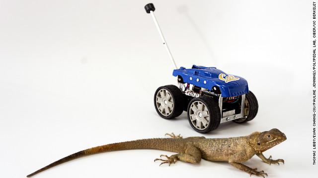 ¿Qué se obtiene del cruce entre un robot y una lagartija?