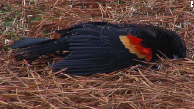Dozens Of Birds Found Dead In Arkansas Town For Second Straight New Year's Eve
