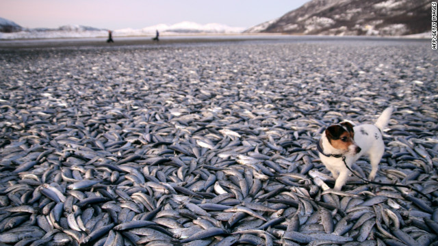 Tons of dead fish appear on, then disappear from Norwegian beach