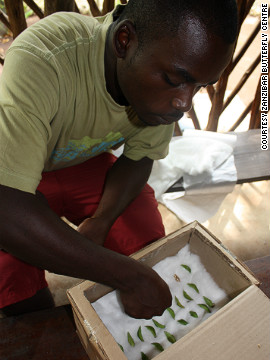 By growing pupae to sell to the center, people no longer have to earn money by making charcoal from the forest.