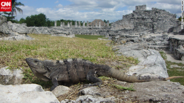 "Chad Samiljan snapped this shot of an iguana in the El Rey Archaelogoical Ruins in Cancun. ""We loved the beach and the friendly atmosphere,"" he said."