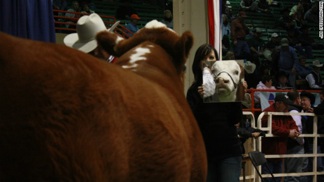 Every year, cattlemen travel from around the Western United States to Denver for the annual National Western Stock Show. One of the highlights is the cattle show. Because cows enjoy looking at themselves, handlers use mirrors to get them to hold their heads up high. This year, CNN's Jim Spellman got a behind the scenes look at this uniquely American tradition:
