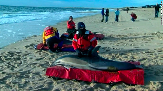 Stranded dolphins tracked to Maine coast, suggesting success in rescue op