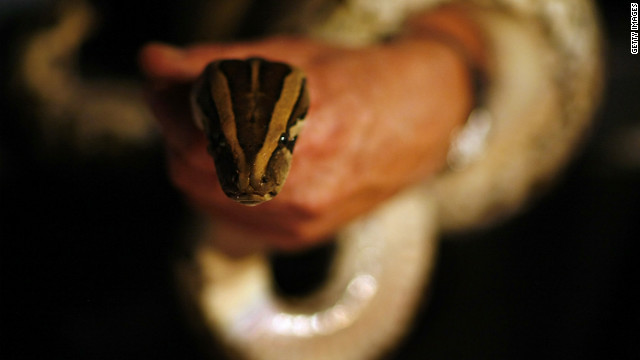Overheard on CNN.com: Readers' solutions for Florida's wild python problems
