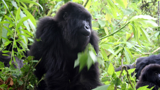 Permits for gorilla treks cost $500 and only 56 are issued per day.