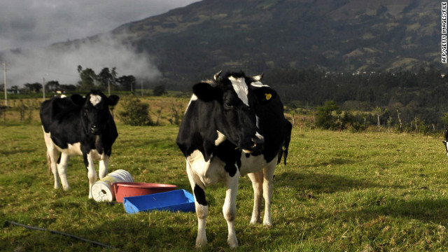Why would Colombia's FARC sell cows?