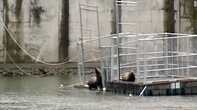 Federal authorities are investigating what appears to be a rash of sea lion killings in the Puget Sound area.