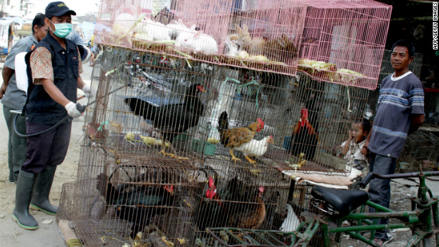 China's bird flu mystery