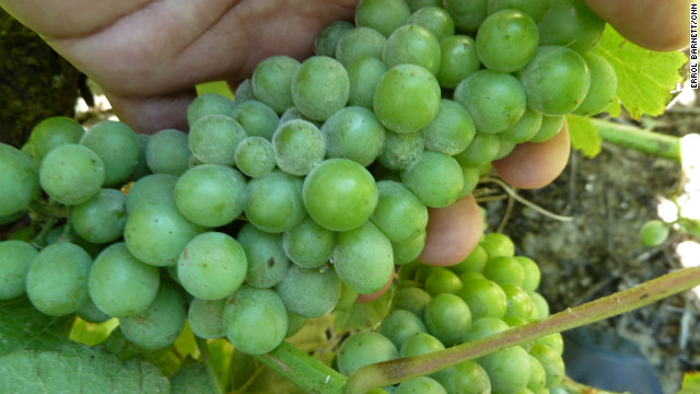 The Western Cape's topography and weather give its grapes their unique taste.