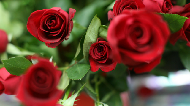 The majority of roses sold in the United States come from Colombia.