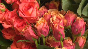 Stopping to smell the roses? You may not catch a whiff - CNN com