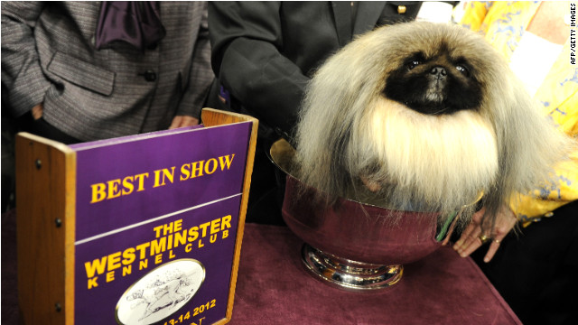 Pekingese, a runner-up from 2011, wins Westminster