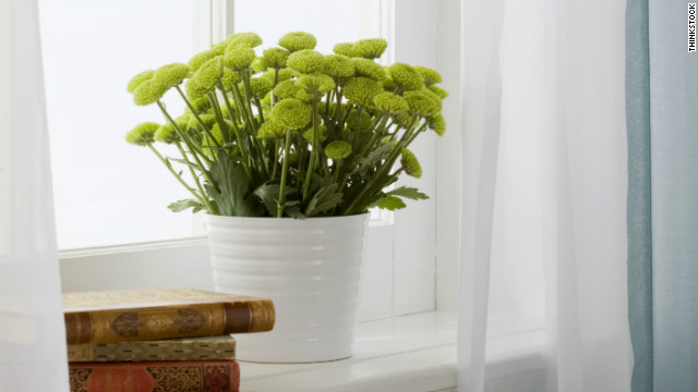 know what kind of light your indoor plants need to receive to thrive