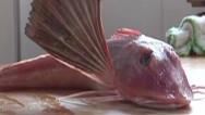 """Un extraño pez con """"alas"""" y """"piernas"""" en China"""