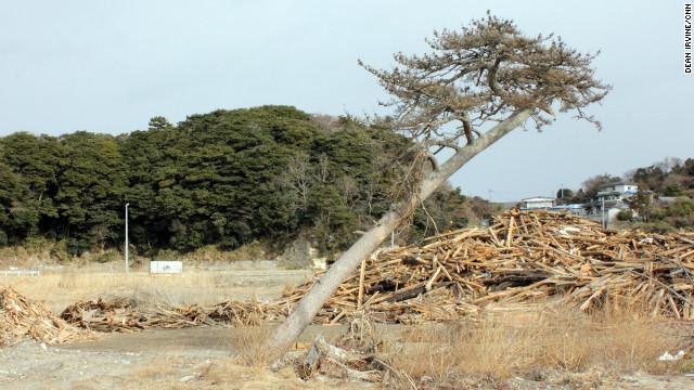 A tree on the coast of Katsurashima bent by the force of the tsunami.