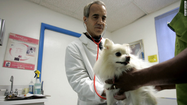 Costly treatments can be avoided by taking preventative measures to promote your pet's health.