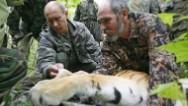 Tensión con China por ataque de tigre de Putin