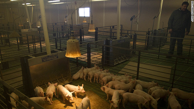 Tofteland inspects young pigs at one of his hog barns outside Luverne, Minnesota. The stench of a hog barn, he says, pales in comparison to the stench of MF Global executives: &quot;Our money was stolen and nobody is being held accountable.&quot; 
