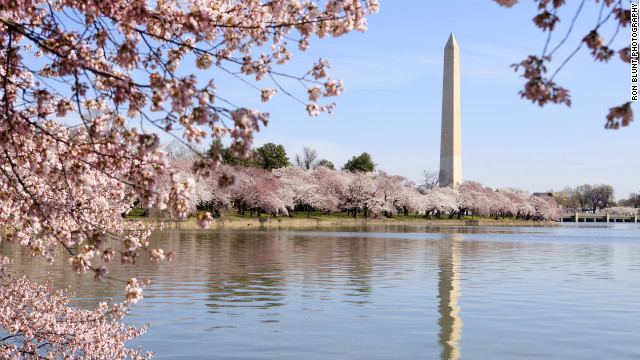Flower lovers will know spring has arrived in the nation's capital when cherry blossoms adorn the Tidal Basin and surrounding sites such as the Washington Monument.