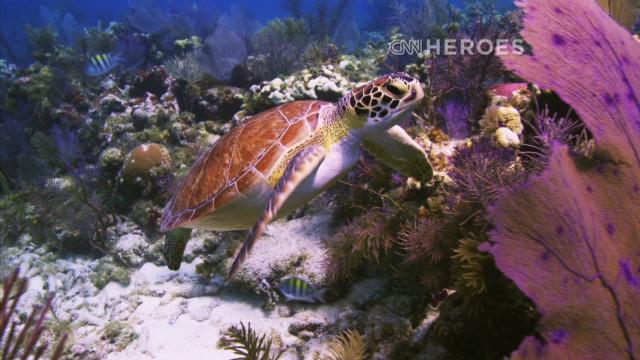 Una expedición marina para restaurar los arrecifes de coral en Florida y el Caribe