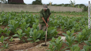A Cuban farmer works the land in Pinar del Rio, Cuba, a region famous for producing the island\'s best tobacco.
