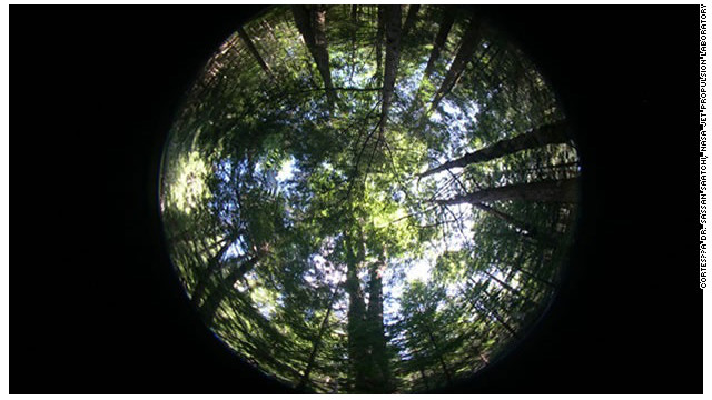 """Un satélite puede observar cómo """"respiran"""" las plantas"""