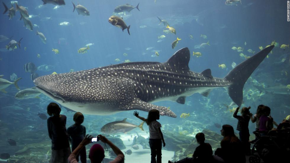 Los 10 Mejores Zool Gicos Y Acuarios Del Mundo Seg N