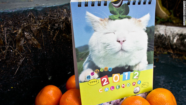 The animal celebs of Japan: Maru, Otousan, Shironeko and more
