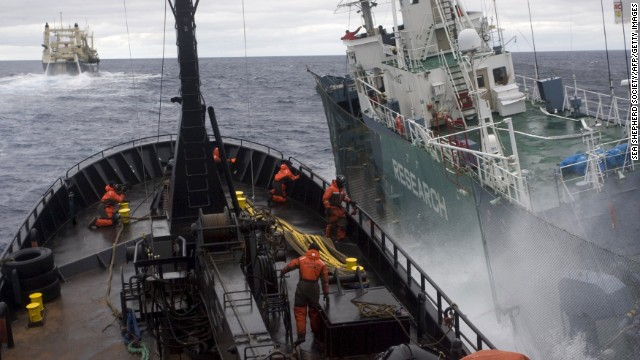 Japan ends whaling season 70% below quota