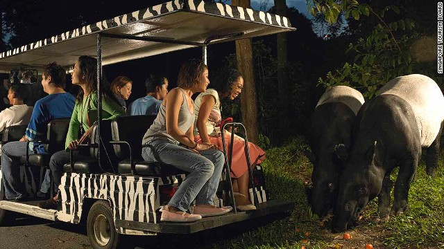 Singapore Zoo's famous Night Safari allows visitors to get up close and personal with a variety of nocturnal animals.
