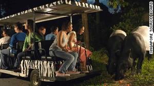 Singapore Zoo\'s Night Safari