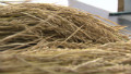 Sewing the seeds of a low carbon future