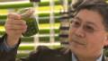 Micro algae eats carbon emissions