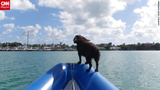 iReporter Kevin Burnham often takes to the water with his dog Mac to enjoy Miami's spectacular weather.