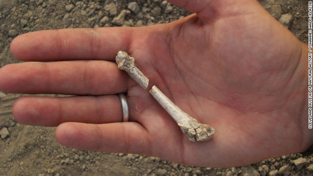 Scientists discover foot of possible new human ancestor