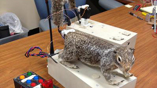 Robot squirrel aids animal behavior study