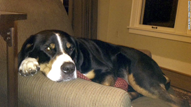 Seems like everybody, including a Swiss mountain dog named Sierra, is hungry for Masters tickets.