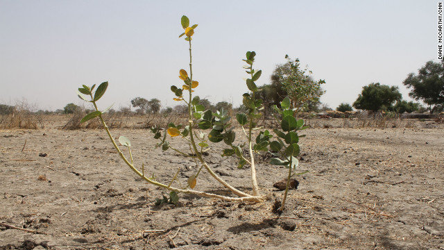 In Central Chad the millet crop, a national staple, has failed in many areas. 'We couldn't even eat the seeds' one woman told CNN.