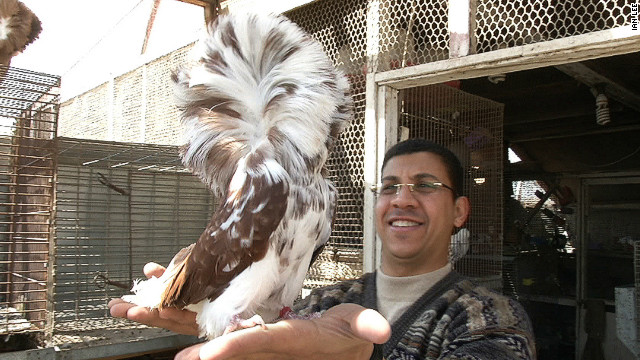 Hassan with one of his most unusual-looking pigeons. 