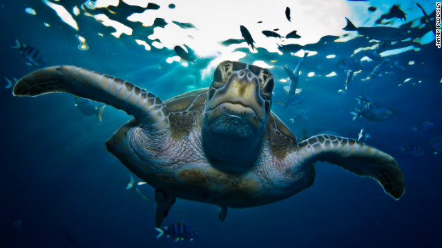 Photographer Jannik Pedersen gets up close and personal with a turtle in the waters surrounding the Similan Islands on Thailand's western coast.