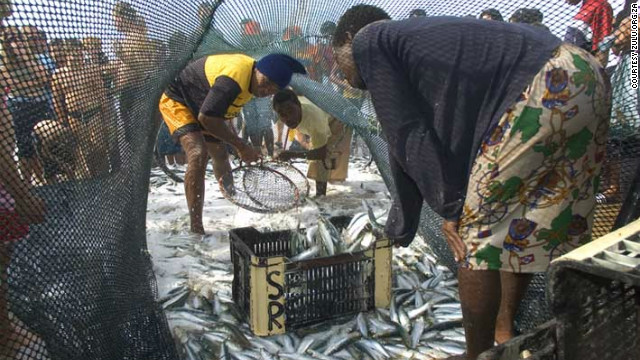 The so-called &quot;Sardine Run&quot; not only attracts a host of hungry sharks, dolphins and diving birds, but many an eager fisherman and tourist besides.