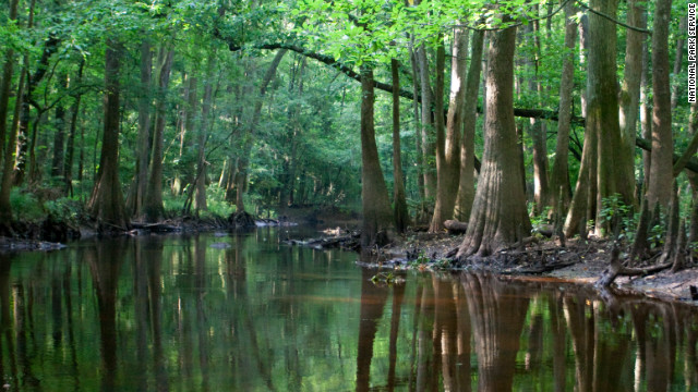 Congaree National Park in South Carolina is the largest expanse of bottomland hardwood forest that remains in the Southeastern United States.