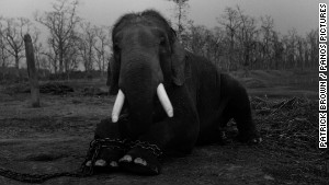 Trafficking endangered animals in Asia