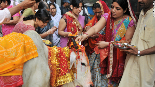 Hindu devotees worship a sacred cow on the eve of Gopastami in Hyderabad on November 3, 2011. The cow is regarded by Hindus as <i>gau mata</i>, or maternal figure, and has had a long-standing central role in India's religious rituals.