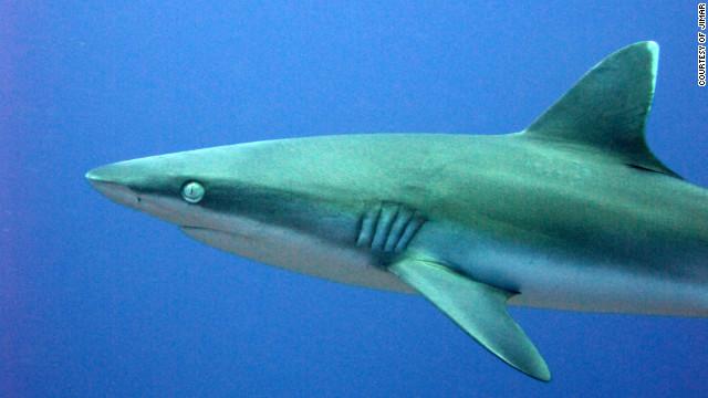 Una turista alemana es atacada por un tiburón en las costas de Florida