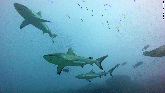 Co-author of the study, Julia Baum said: &quot;Reef shark fins are not the most valuable because they tend to be smaller than other sharks, but a lot of other oceanic sharks have already declined a lot so that's why fisherman are now turning to them.&quot;