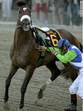 Hopes of a second-leg win in the Triple Crown were shattered after Barbaro broke early at the Preakness Stakes. He eventually started the race but misstepped early on and shattered his hind leg in more than 20 places.